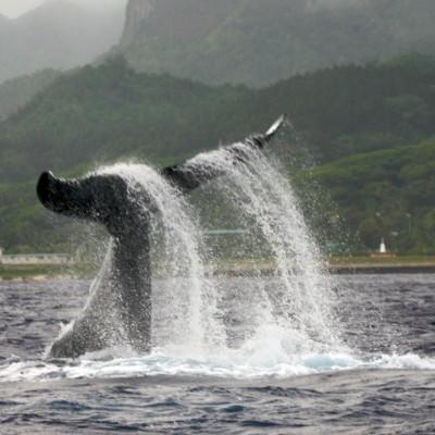 Legislating the Cook Islands Whale Sanctuary