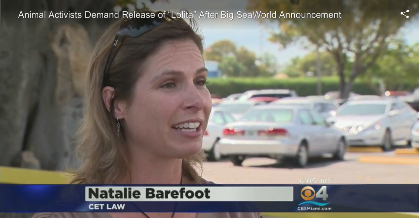 Sea World Announces Significant Changes For Orca
