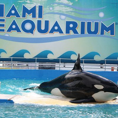 Lolita's Endangered Species Act Case Dismissed