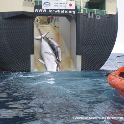 European Parliament Calls on Japan to Stop its Whaling Activities