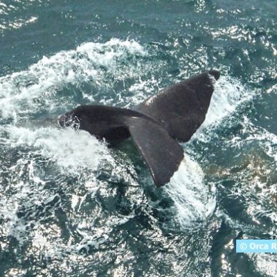 Studying Whale-Watching In and Around MPAs on the Pacific Coast